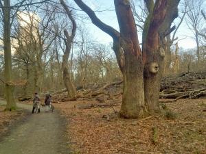 Among old trees.