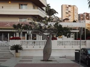 Peculiar tree