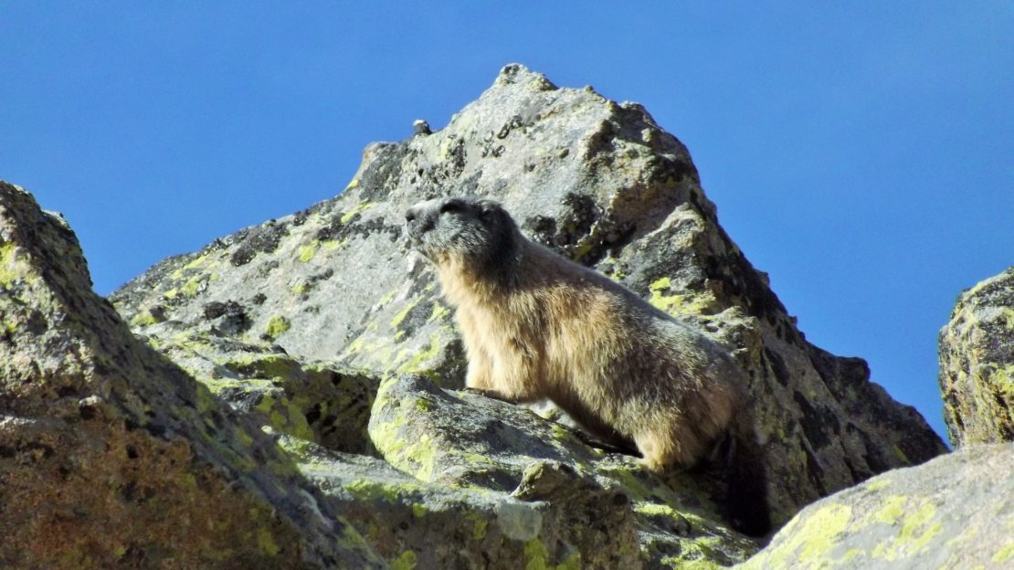 Day 15 & 16. Meeting the marmot in the Pyrenees. graphic