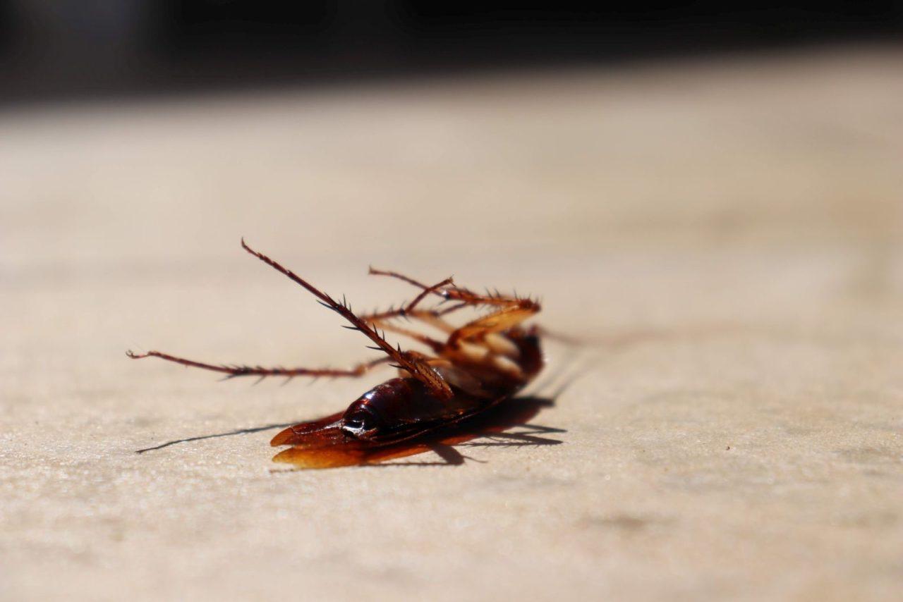 Martwy karaluch