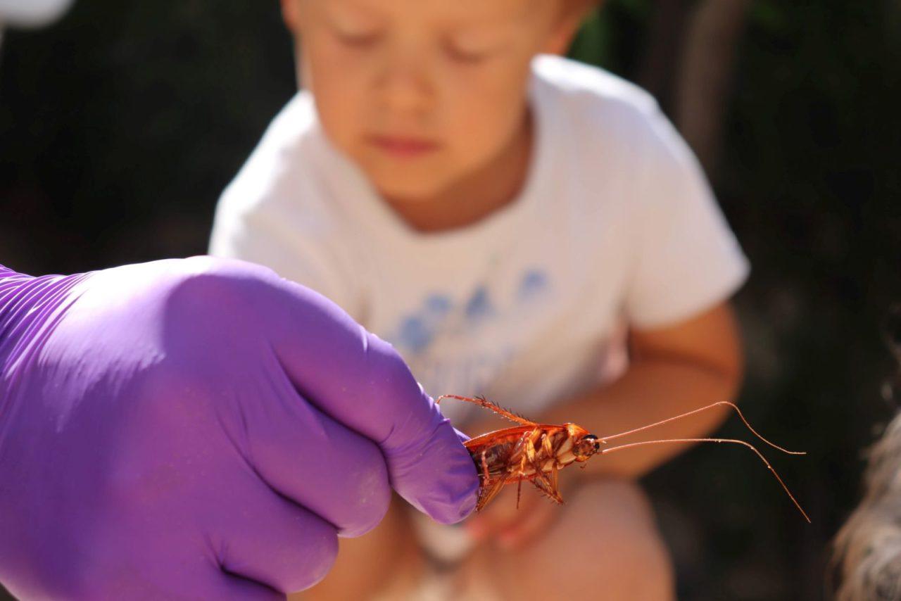 Niesłychanie fascynujące stworzenia - karaluchy 2