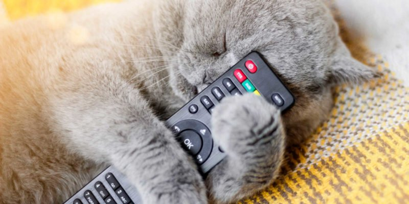 sleeping cat with remote control