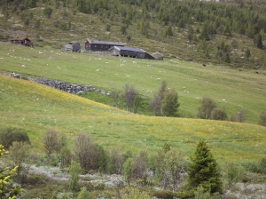 Scenic routes in Central Norway - day 3 9
