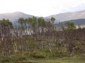 Scenic routes in Central Norway - day 3 18