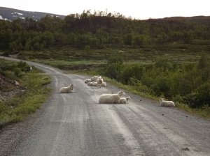 Scenic routes in Central Norway - day 3 19